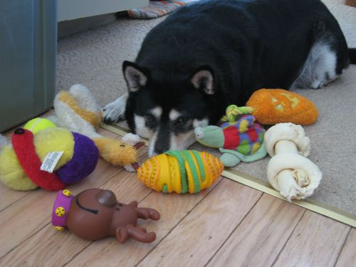 all these toys, yet i am still so bored